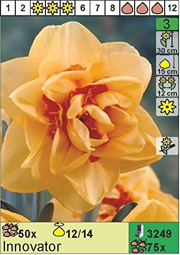 Narcissus - Gefüllte Narzisse Innovator (5 Zwiebeln) Das Blumenliesel