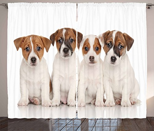 Lunarable Cute Curtains, Group of Jack Russell Terrier Puppies Best Friends Domestic Pets Baby Dogs, Living Room Bedroom Window Drapes 2 Panel Set, 108 W X 63 L Inches, Brown White Black - Jack Russell Terrier Puppies Pictures