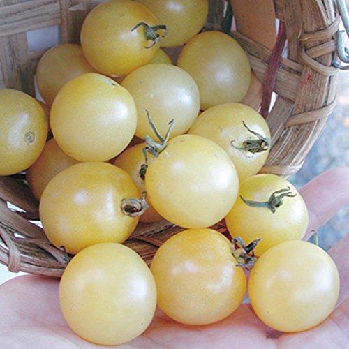 snow white tomato seeds - 2