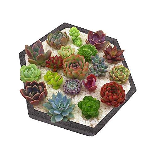 - Hexagon Shaped Succulent Plants Silicone Molds Flowerpot Home Decoration Concrete Planter Pallet for Garden Indoor Outdoor Decor