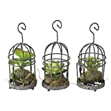Time Concept Hanging Cage Decorative Faux Succulents - Set of 3 - Artificial Indoor Houseplant