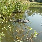 Amazon Com 22 Quot Alligator Head Decoy Amp Pond Float With