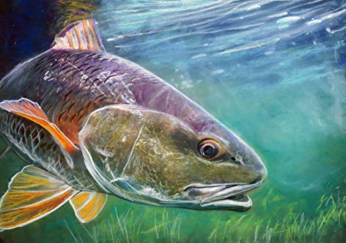 Redfish Art, Redfish Fishing Wall Art, Red Drum Print, Hand Signed Fishing Gift By Jack Tarpon, Colorful Fish Pastel Painting