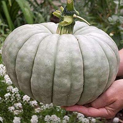 20pcs Pumpkin Seeds Queensland Blue Ukraine Heirloom Vegetable Organic Seeds Melon Organic Vegetable Seeds Home Gar : Garden & Outdoor