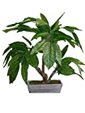 Mamone Home & Garden H Mini Mango Leaf Tree In Wood Planter, 28''