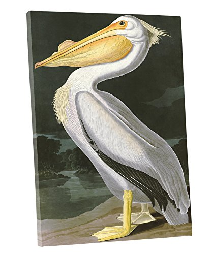 niwo-art-tm-american-white-pelican-by-john-james-audubon-the-birds-of-america-reproductions-giclee-p