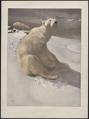 (1900 Photo A polar bear seated on snow and another polar bear walking in background] / Carl Ederer.)