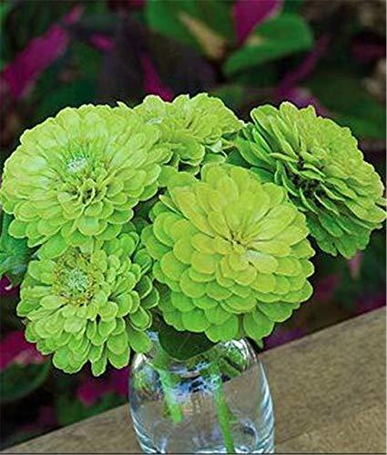 100ミックスひなの盆栽Pretty Pastel Colors Flower bonsais:18