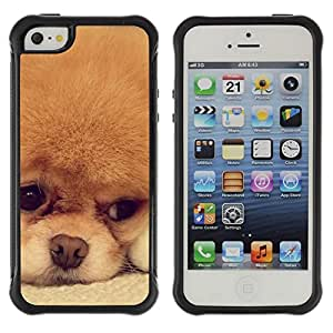 LASTONE PHONE CASE / Suave Silicona Caso Carcasa de Caucho Funda para Apple Iphone 5 / 5S / Pomeranian Cinnamon Orange Breed Dog