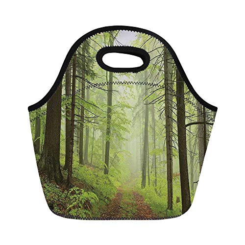 Outdoor Durable Lunch Bag,Trail Trough Foggy Alders Beeches Oaks Coniferous Grove Hiking Theme for School Office,11.0