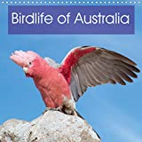 Birdlife of Australia 2020: A beautiful calendar that showcases some of the unique birdlife of Australia (Calvendo Nature)