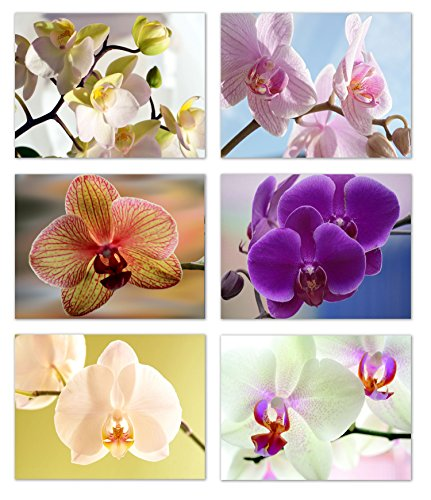 Orchid Blank Note Cards - Flower Greeting Cards with Envelopes - 6 Unique Designs - 5.5