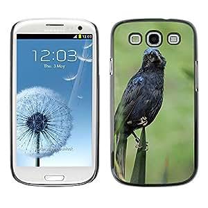 Etui Housse Coque de Protection Cover Rigide pour // M00108442 Zoo Bajos Holanda Blue Bird // Samsung Galaxy S3 S III SIII i9300