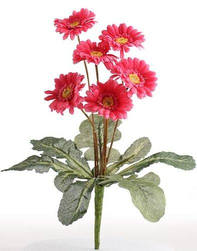 gerbera daisy bush - 4