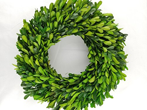 Preserved Boxwood Wreath 12 in by Tradingsmith (Greens Preserved)