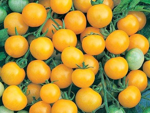PREMIER SEEDS DIRECT Tomato Cherry - Honeybee F1-40 Finest Seeds