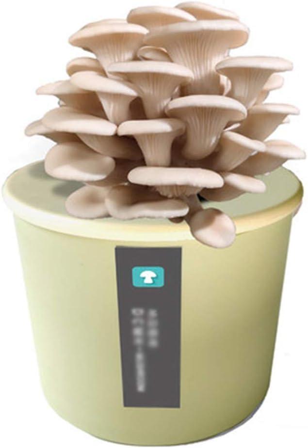 Juego Cultivo de Hongos Kit, Kit Autocultivo Setas, Caja de Cultivo Casero de Setas Ostra, Cultivar Setas en Casa en Solo 15-25 Días, Regalos Originales Niñosgreen-White Oyster Mushroom