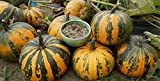 buy Japanese Striped Kakai Pumpkin 15 Seeds -Delicious now, new 2018-2017 bestseller, review and Photo, best price $3.00