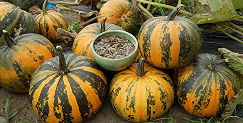 Japanese Striped Kakai Pumpkin 15 Seeds -Delicious