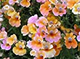 60+ Nemesia Carnival Mix Flower Seeds / Strumosa / Annual