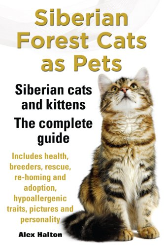 Siberian Forest Cats as Pets. Siberian cats and kittens - Complete Guide. Includes health, breeders, rescue, re-homing and adoption, hypoallergenic traits, pictures and personality.