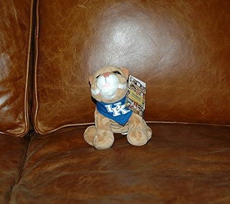 Amazon Com Kentucky Wildcats Plush Bean Bag Mascot Sports