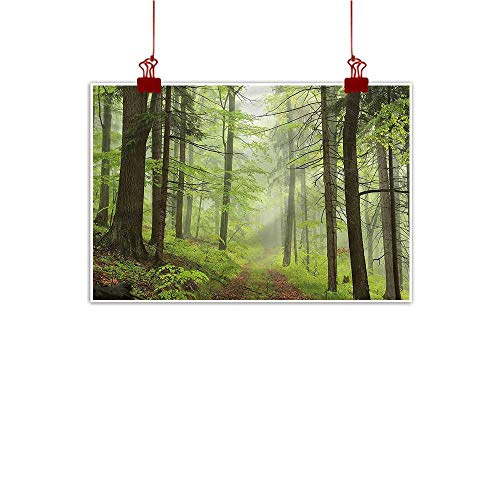 - Sunset glow Fabric Cloth Rolled Outdoor,Trail Trough Foggy Alders 36