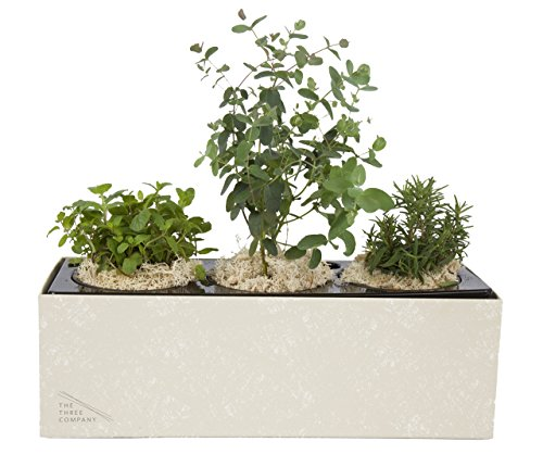 Herbs To Plant In The Fall Self Watering Indoor Planter
