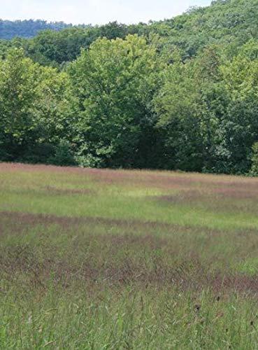 1 oz Seeds (Approx 26000 Seeds) of Tridens flavus, Purpletop Grass