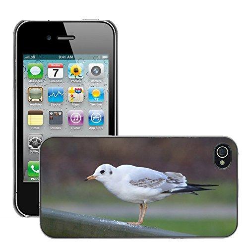 Bild Hart Handy Schwarz Schutz Case Cover Schale Etui // M00133969 Seagull Vogel Natur // Apple iPhone 4 4S 4G