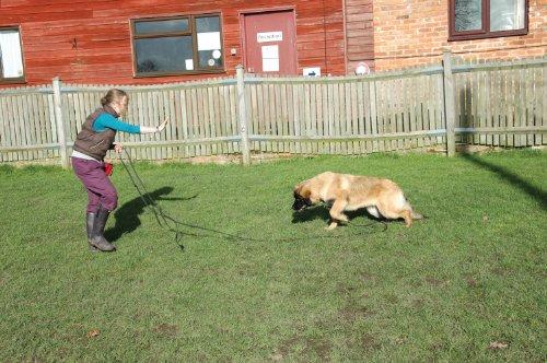 The Company of Animals CLIX Recall Training Line 10m 4
