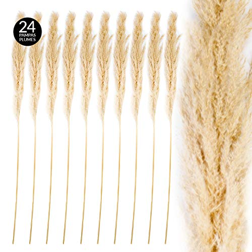 - Koyal Wholesale Tall Natural Dried Pampas Grass, Natural Cream Color, 51-55 Inches, Bulk 24 Pcs Extra Large Real Pampas Plume Stems, Long Dry Grass for Wedding Arches, Centerpieces, Floor Vase Decor