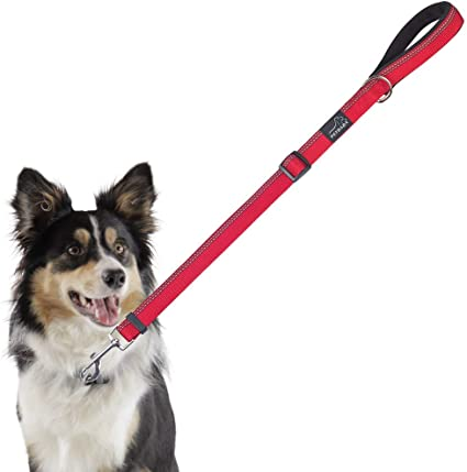 Bahob/® Quality Designer Windup Retractable Dog Lead Training Walking Heavy Duty Leash 5M Long Extendable For Small /& Large Pet