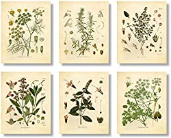 related image of Set of 6 Herb Botanical Prints, Unframed