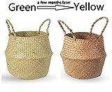 BrilliantJo Seagrass Belly Basket, Woven Plant Pot