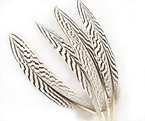 6pcs White Brown Natural Striped Zebra Long Pheasant Wing Feathers DIY Jewelry Costume Mask Hat Dreamcatcher 20-22cm