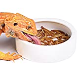 Reptile Food or Water Dish Worm Bowl Ceramic Dish Mealworm Feed Feeder for Lizard Leopard Gecko Lizard Spider Scorpion Crested Gecko Chameleon Corn Snake Centipede Crickets Beetle Jelly Mealworms (M)