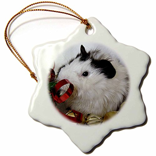 3dRose Baby Guinea Pig 2 with Gold Bells Photography by Angel and Spot Snowflake Porcelain Ornament, 3-Inch