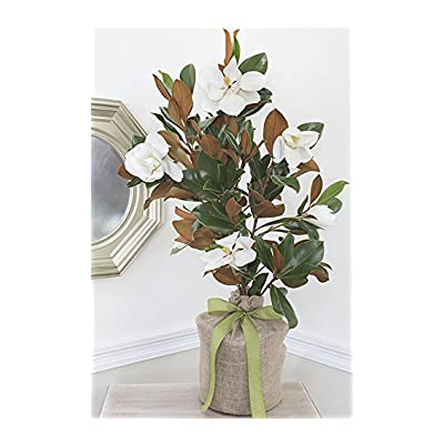 Southern Magnolia Large Sympathy Gift Tree by The Magnolia Company - Get Beautiful and Fragrant Flowers on Lush