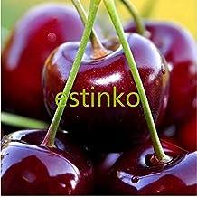 The Best Seller 30pcs/lot US Cherry Seeds Cherry Tree Seeds Dwarf Cherry Tree Fruit Seeds Delicious Fruit Cerasus Pseudocerasus Pot Plant Bonsai