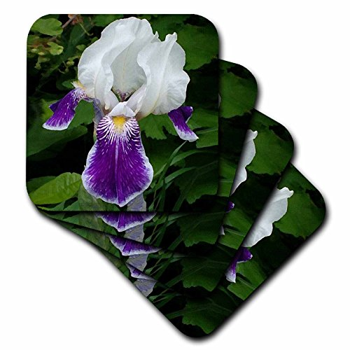 3dRose CST_4120_3 Purple Iris Ceramic Tile Coaster (Set of 4)