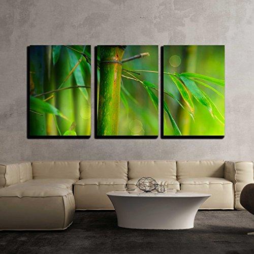 Bamboo x3 Panels