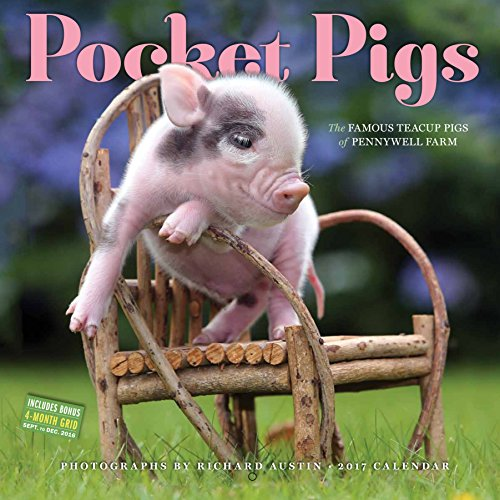 Pocket Pigs Wall Calendar 2017: The Famous Teacup Pigs of Pennywell