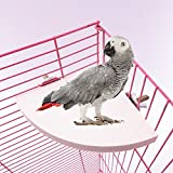 Pevor Wooden Parrot Bird Cage Perches - Small Animals Stand Platform, Budgie Toys Bird Stand for Parakeets Small Parrot Conure Hamster Gerbil Rat Mouse, 3 Size (S, M, L) (L)