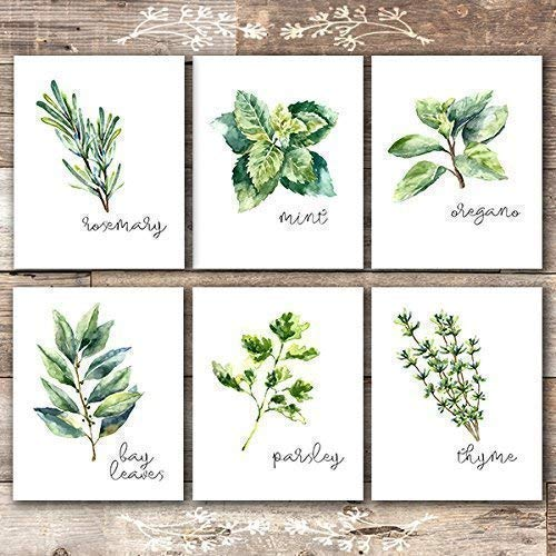 Kitchen Herbs Art Prints - Botanical Prints - (Set of 6) - Unframed - (Garden Decor Art Print)