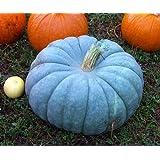 Jarrahdale Blue Pumpkin, Cucurbita Maxima,10 Seeds (6-10 Lbs.)