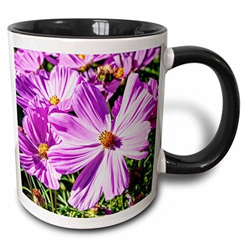 3dRose Alexis Photography - Flowers - Pink daisy flowers on a sunlit flowerbed. Summer joy - 11oz Two-Tone Black Mug ()
