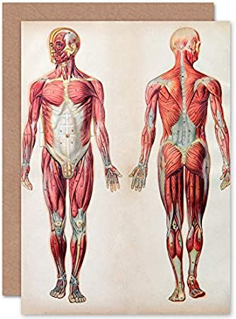 Amazon Com Fine Art Prints Human Body Anatomy Muscles Greeting Card With Envelope Inside Premium Quality Home Kitchen