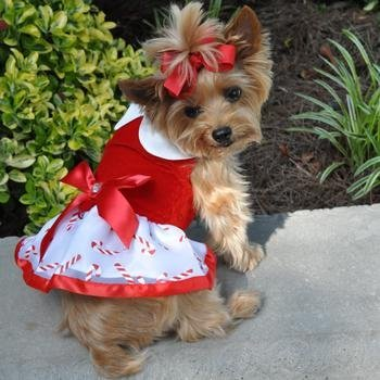 DOGGIE DESIGN Holiday Dog Harness Dress - Candy Canes (X-Small)