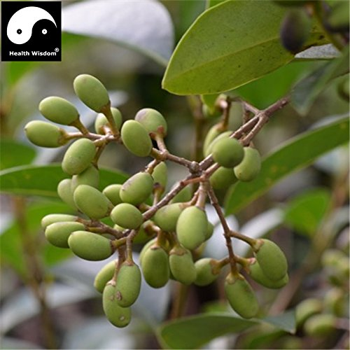 Chinese Ligustrum Lucidum Tree Seeds Herbal Medicine Glos...